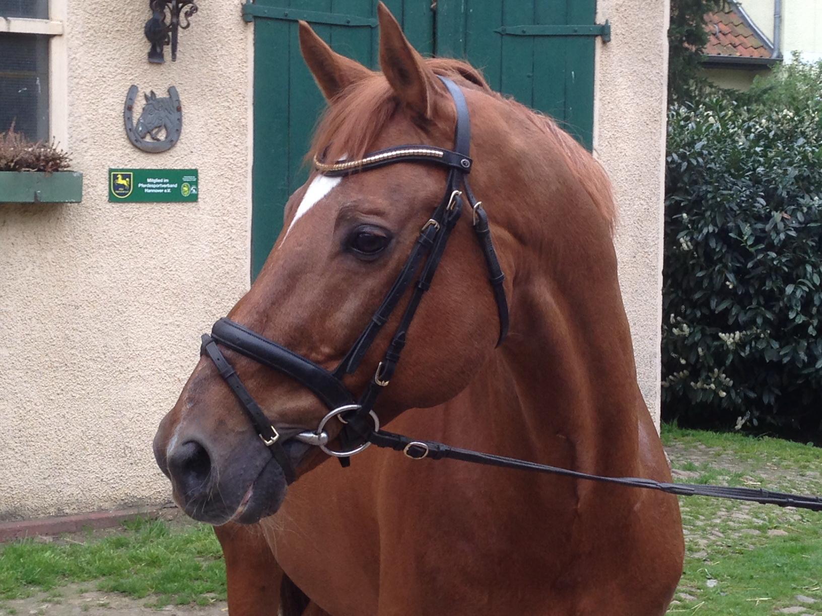 Kranken und OP Versicherung für Pferde